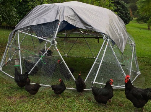 4 Metre diametre Chicken Dome with a swing door large enough for you to walk inside.